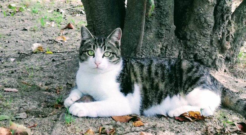 ストロングゼロはほどほどに、触れる猫を探そう